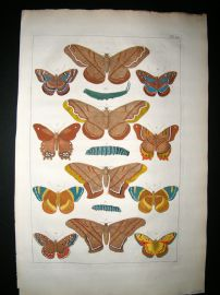 Albertus Seba C1750 Folio Hand Coloured Antique Print. Butterflies 21
